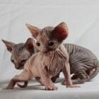 Kattenallergie weetjes en tips