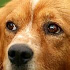 Verzorging van honden