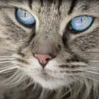Welke vachtkleuren zijn er bij katten?