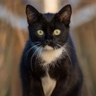 Kattenvoer en voedingsstoffen