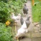 Zelf kippen houden