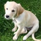 Waar koop ik mijn pup?