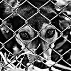 Adoptie Spaanse asielhonden uit Perreras (Dodingsstations)