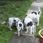 De hond en zijn staart: humeurbarometer en werkinstrument