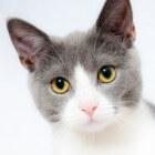 Gezondheidscheck bij de kat: eenvoudig zelf te doen