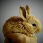 Gezondheidscheck bij het konijn: eenvoudig zelf te doen