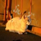 De buitengewone zintuigen van uw kat