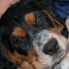 De vijfde week in het leven van een pup