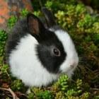 Giftige bloemen en planten voor huisdieren