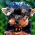 Designer Dogs – trendy honden van veel beroemdheden (celebs)
