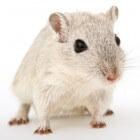 Hamsters & Voeding - Wat mogen hamsters eten en wat niet?