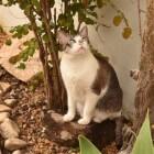 Biologisch en vegetarisch kattenvoer