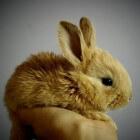 Wat kost een konijn per maand?