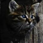 De leeftijd van de kat