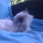 Het onderzoek naar doofheid bij katten