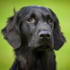 De hond mag mee naar Engeland, nieuwe regels vanaf 2012