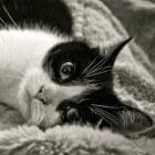 Stress bij katten - Natuurlijke oplossingen