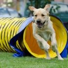 De Hondenspeeltuin, dikke pret voor uw hond en voor uzelf!