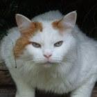 Is het waar dat katten geen smaakzin hebben?