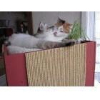 Handleiding: het maken van een krabpaal voor de kat