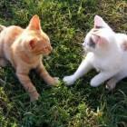 Opvoeding van kittens