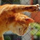 Huisdieren: Polydactylie, wat is het?