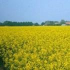 Bijen en het verbod op neonicotinoïden