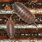Beestjes in en om het huis - zilvervisje, muis, mier en meer
