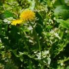 Milieuvriendelijk onkruid en insecten bestrijden