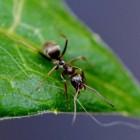 Mieren bestrijden in de tuin of rondom je huis