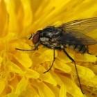 Schadelijke insecten op kool - biologische bestrijding