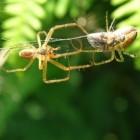 Het voorkomen en verwijderen van spinnen- en insectenpoep