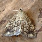 Motvlinders bestrijden: hoe verwijder je motvlinders in huis