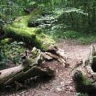 Dood hout brengt leven in bos
