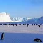 Het leven op Antarctica