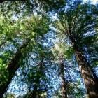 Duizenden dieren en planten met uitsterven bedreigd