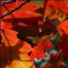 De herfst en z'n typische kenmerken