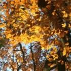 Herfst- of najaarsdip bestrijden met natuurlijke middelen