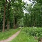 Het Liesbos in Noord-Brabant