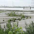 Natuurgebieden in de polders en in de haven van Antwerpen