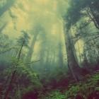 Mist, een prachtig natuurverschijnsel