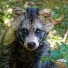 Wildlife crime; geweld tegen wilde dieren in Nederland