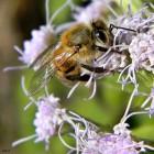 Wanneer zijn insecten schadelijk of nuttig, en waarom?