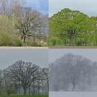 Monumentale bomen en beeldbepalende bomen