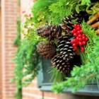 Winterwetenswaardigheden: Natuurijs en mistletoe