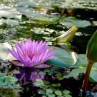 Schoonmaken: algen verwijderen uit de vijver