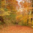 De natuur tijdens de herfst in huis halen