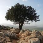 Goed doel: plant een boom in Israël - JNF