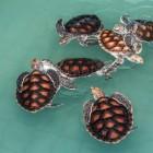 Overwintering waterschildpadden