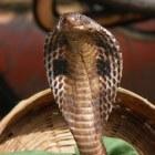 Slangenbeten voorkomen